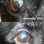 Barney's eye