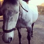 equine acupuncture patient 2