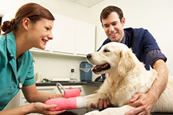 dog having acupuncture