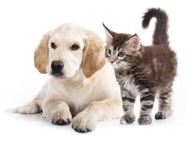 acupuncture for puppy and kitten